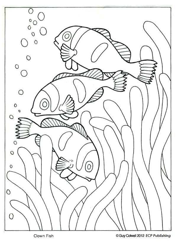 595x842 Clown Fish Coloring, Ocean Animal Coloring Pages Patterns