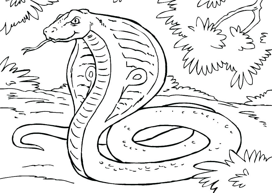 875x620 Snake Coloring Pages Free Snake Coloring Pages Cobra Snake