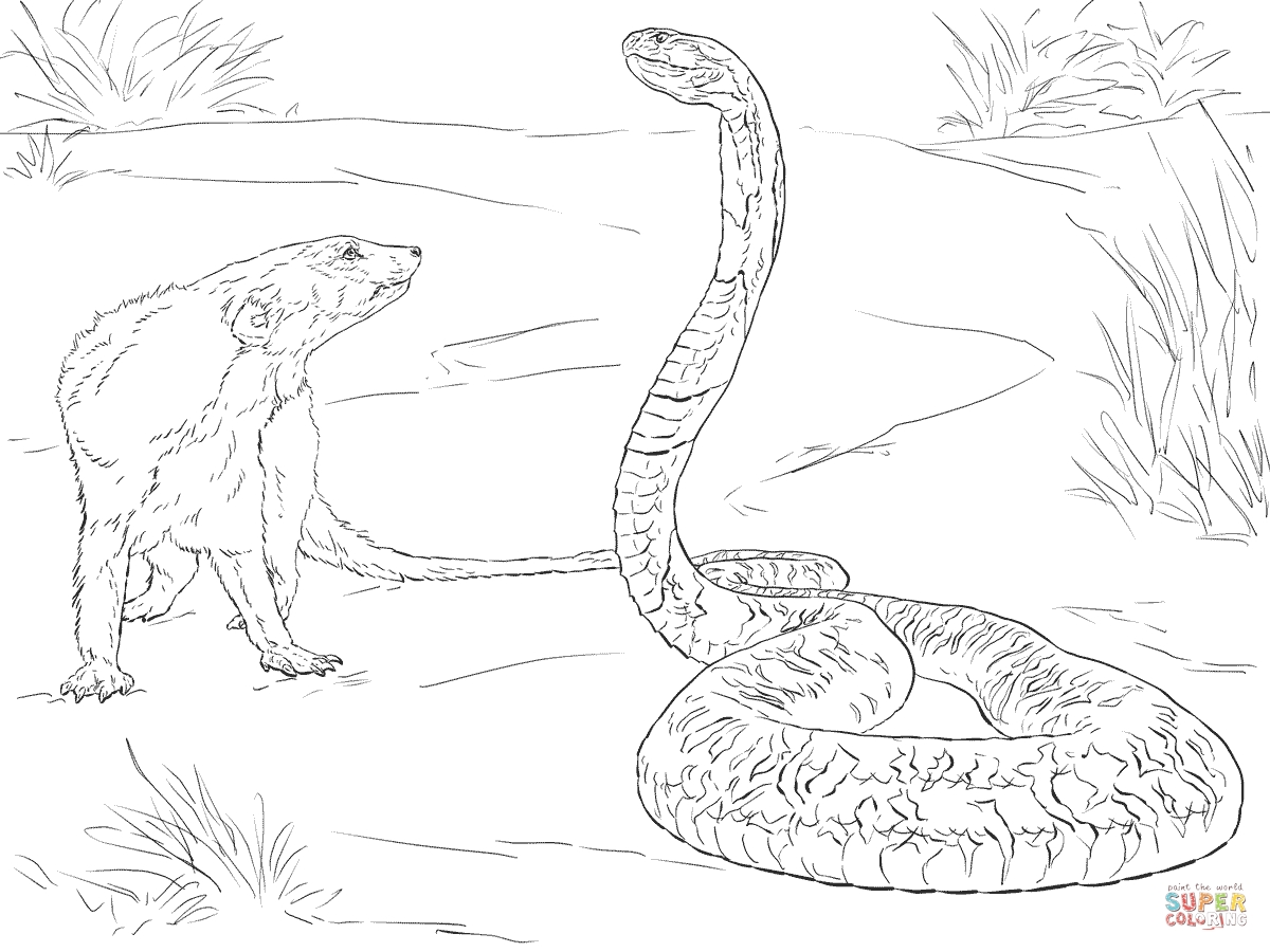 1200x900 Spitting Cobra Coloring Pages Free Coloring For Kids