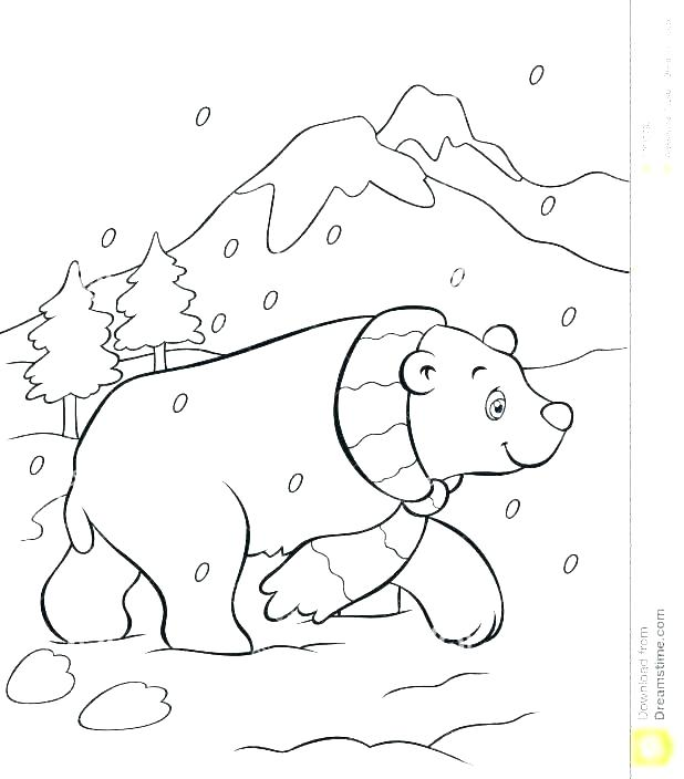618x704 Polar Bear Color Page Polar Bear Coloring Pages Polar Bear