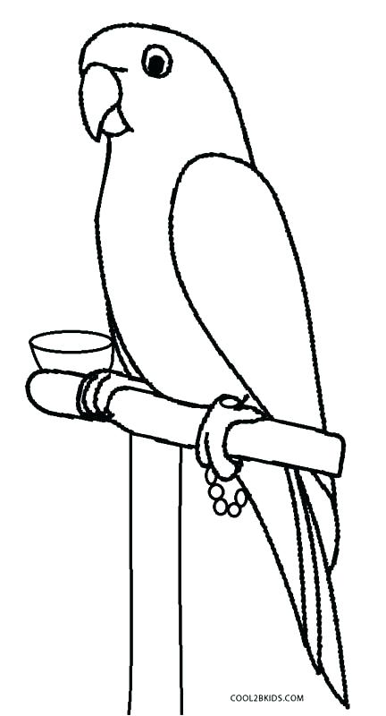 432x800 Coloring Pages Parrot Parrot Pictures For Kids To Color Beautiful