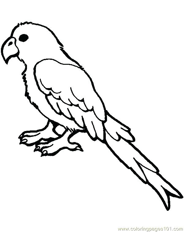600x756 Parrot Coloring Pages Impressive Parrot Template Coloring Page