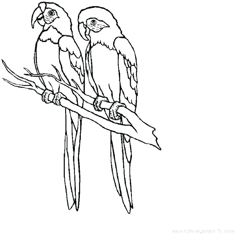 800x798 Baby Parrot Coloring Pages Parrot Coloring Pages Baby Coloring