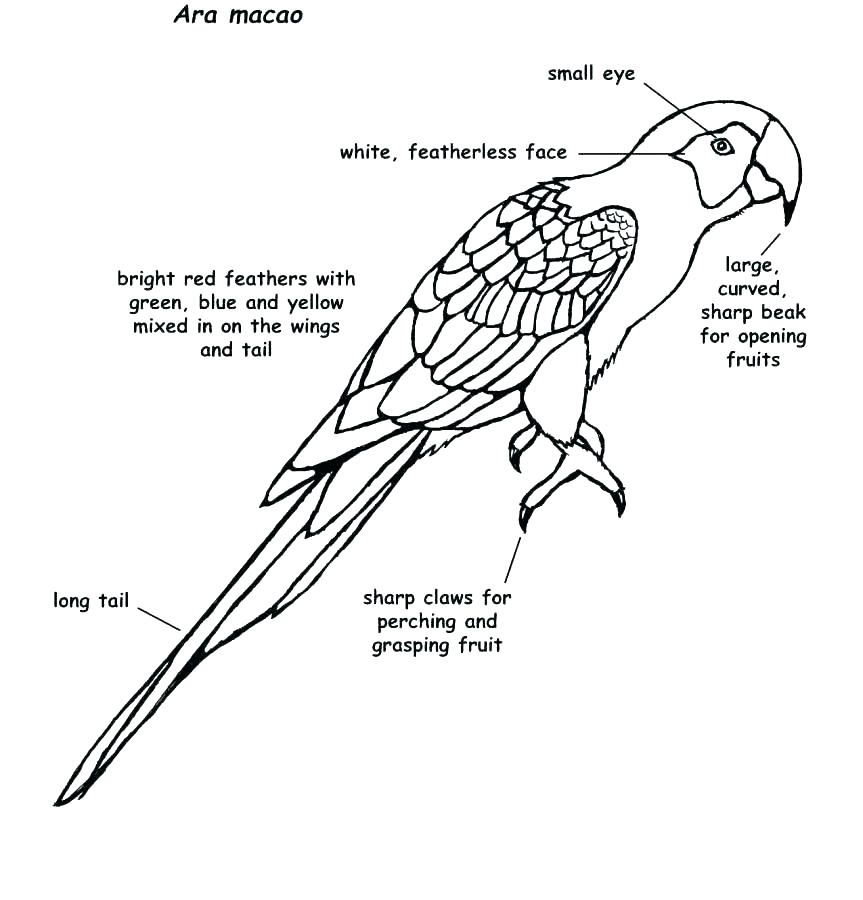 863x900 Baby Parrot Coloring Pages Vanda