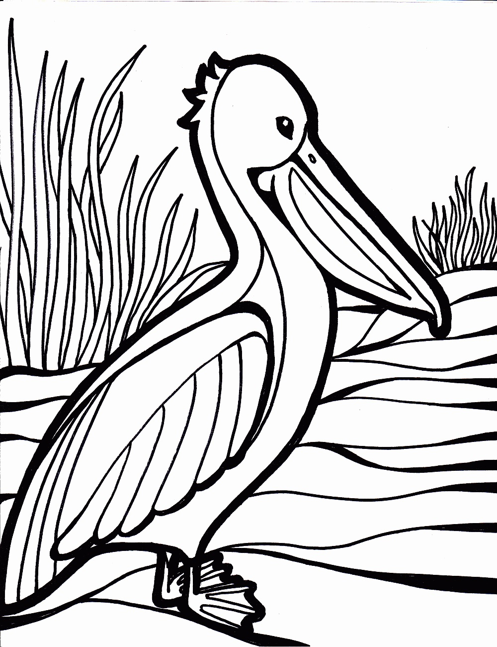 1000x1300 Cockatoo Coloring Pages Sweet Cockatoo Coloring Pages To Cockatoo