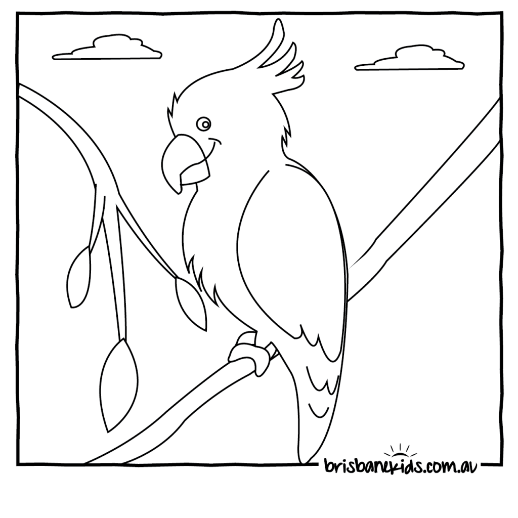 1024x1024 Coloring Pages Cockatoo Birds Easy For Kids And Toddler Impressive