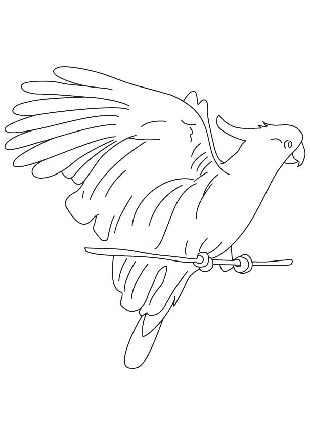613x860 Macaw Coloring Pages Macaw Coloring Page Tubers Eating Cockatoo