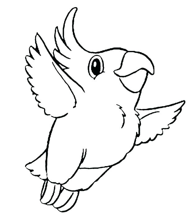 600x686 Parrot Coloring Pages Cockatoo Parrot Coloring Pages Realistic