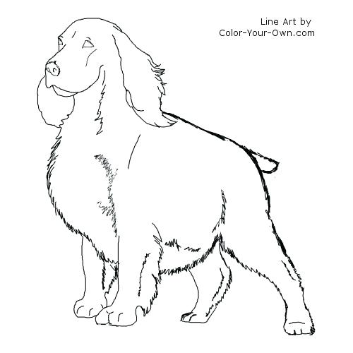 500x500 Cocker Spaniel Coloring Pages Lps Cocker Spaniel Coloring Pages