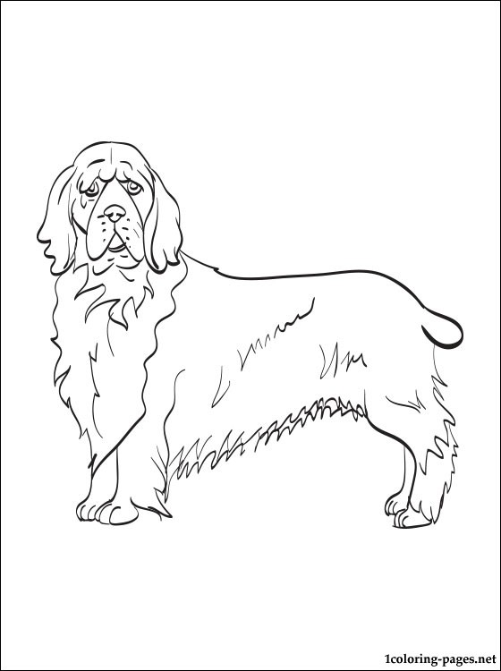 560x750 Cocker Spaniel Coloring Pages