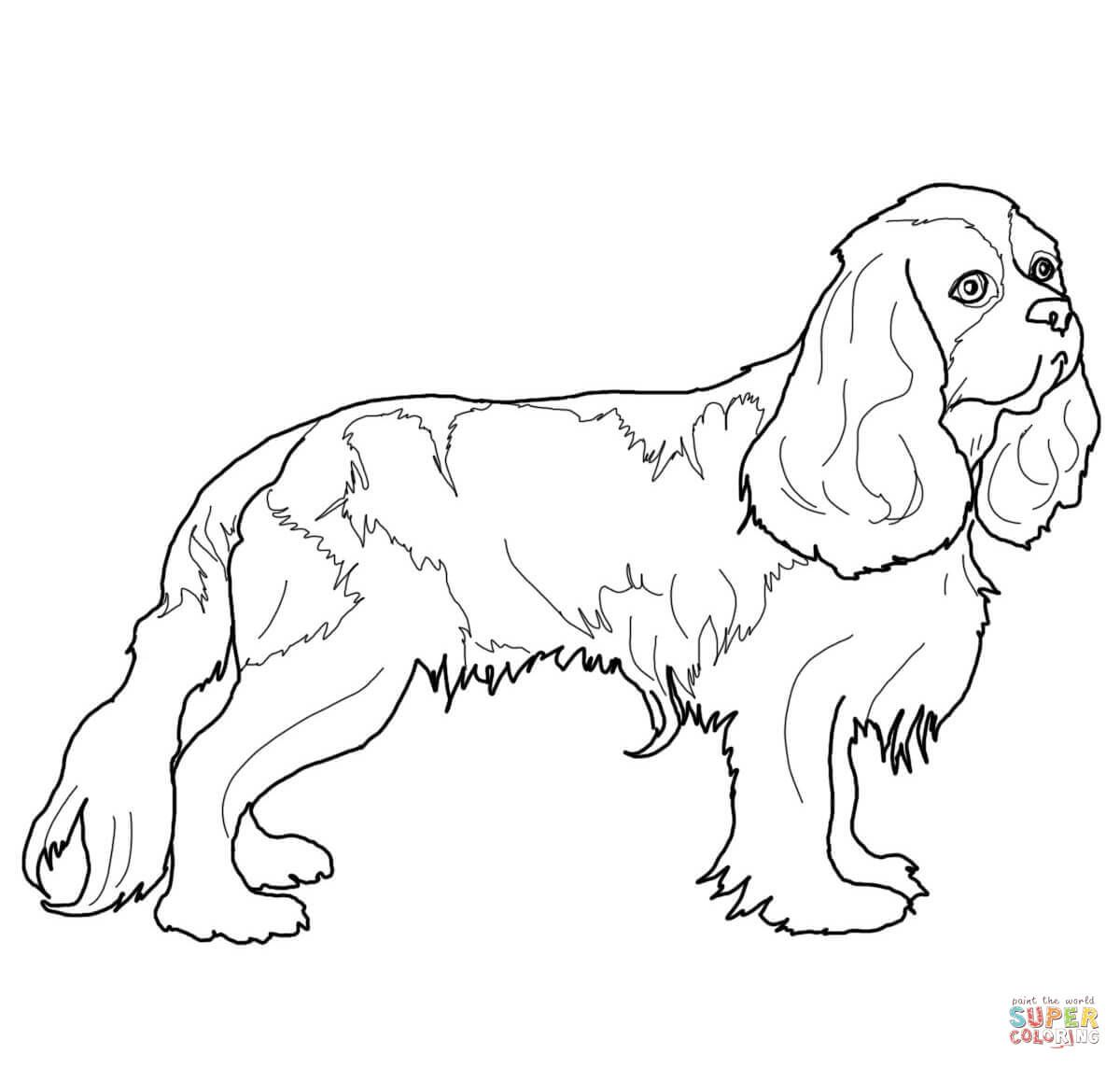 1200x1144 Cocker Spaniel Coloring Page Free Printable Coloring Pages