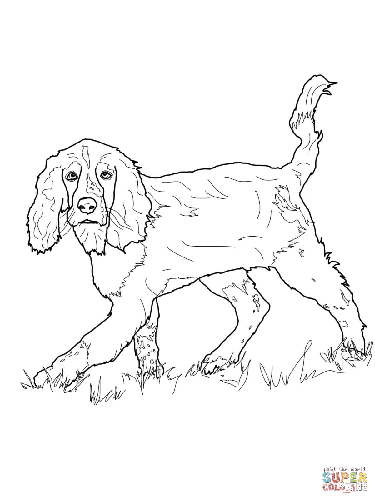 1200x1600 English Cocker Spaniel Coloring Pages Printable Coloring Pages