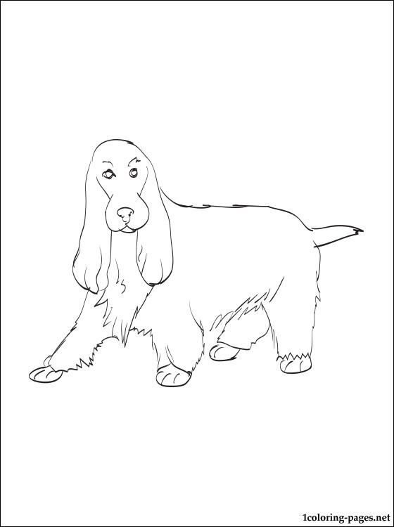 560x750 English Cocker Spaniel Coloring Page Coloring Pages