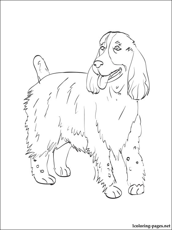 560x750 English Springer Spaniel Coloring Pages