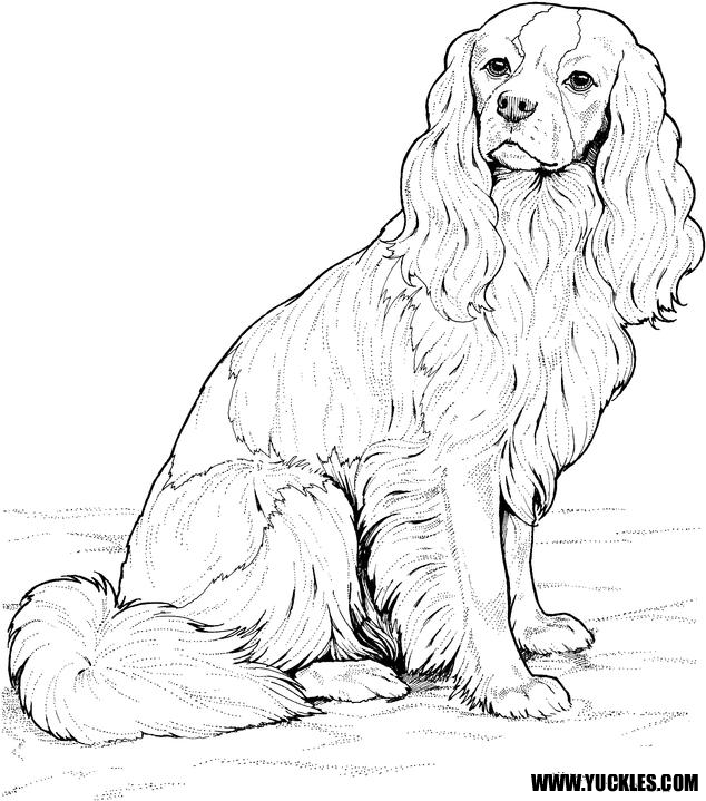 634x719 Cavalier King Charles Spaniel Coloring Page Art
