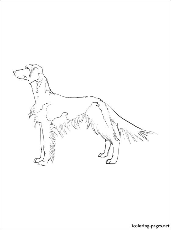 560x750 Welsh Springer Spaniel Coloring Page Coloring Pages