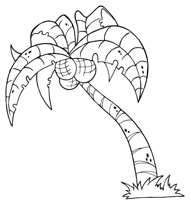 618x663 Coconut Tree Coloring Palm Tree Coloring Page Printable Palm Tree