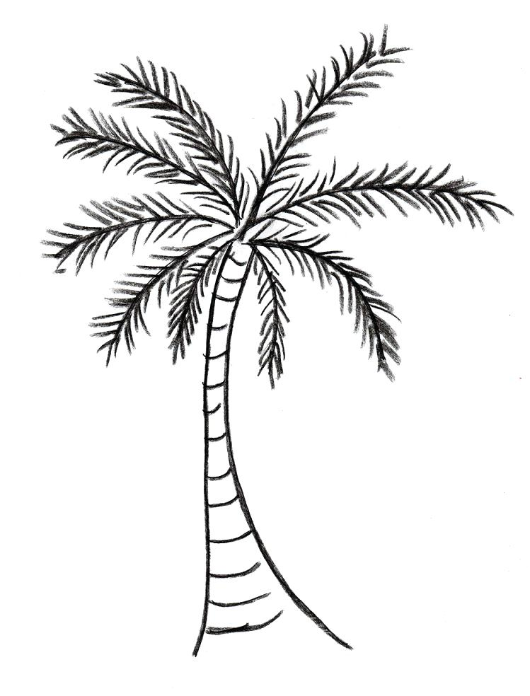 Coconut Tree Coloring Page at GetDrawings.com | Free for ...