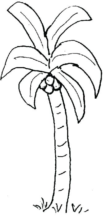 333x702 Palm Tree Templates Palm Tree Templates Tree Coloring Pages