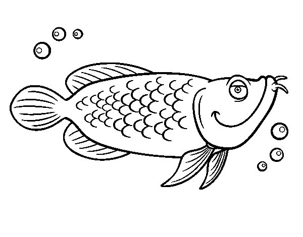 600x470 Atlantic Cod Coloring Page