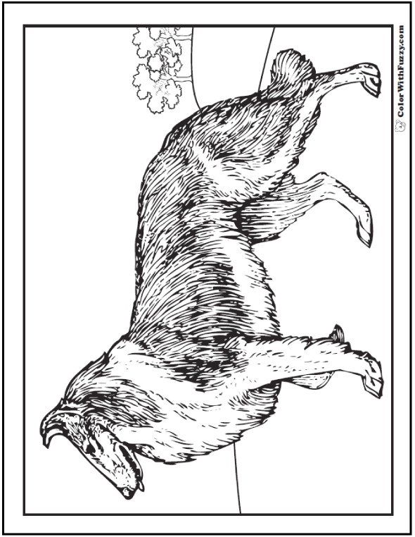 Collie Coloring Pages