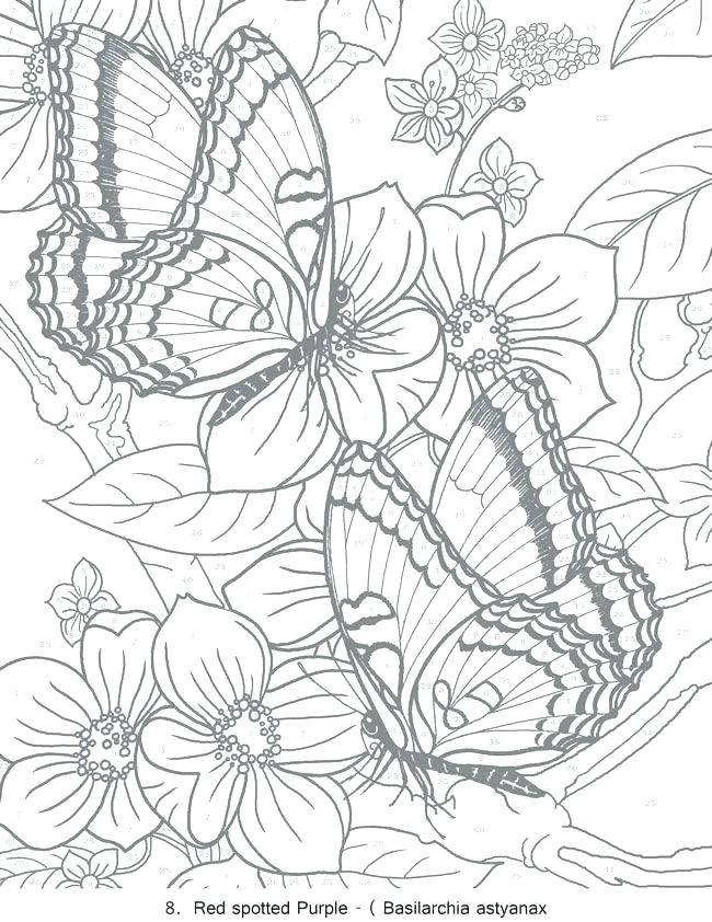 Color By Number Coloring Pages For Adults at GetDrawings.com | Free ...
