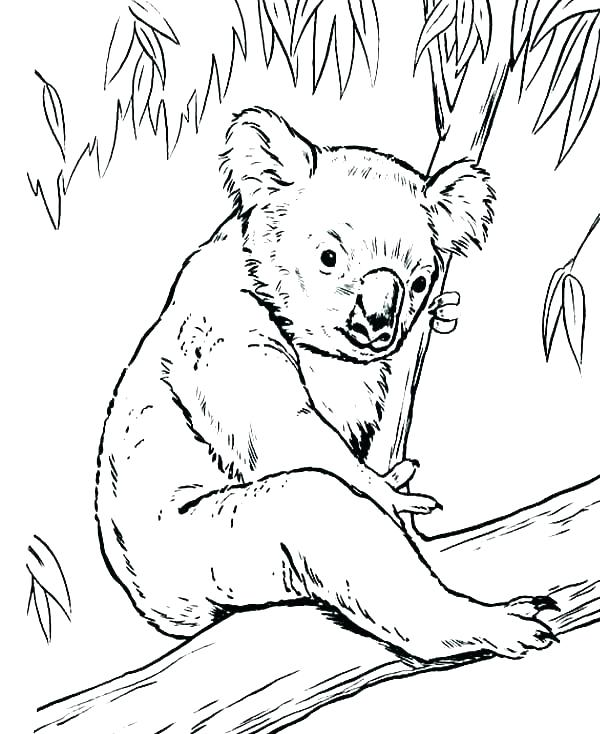 600x734 Lion Guard Coloring Pages Printable Sea Page Koala Image Gallery