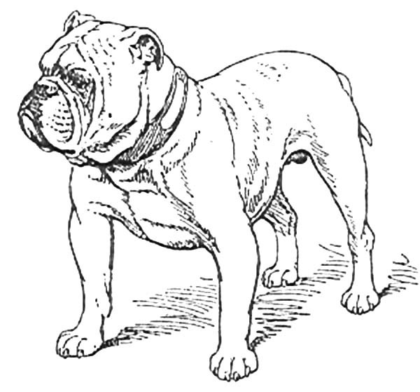 600x559 Boxer Dog Stand Guard Coloring Pages Best Place To Color
