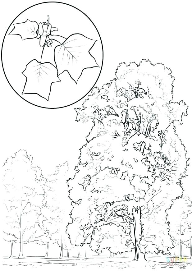 618x872 Yellow Coloring Pages Yellow Coloring Pages Color Yellow