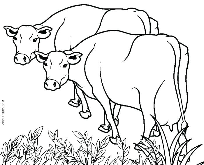 700x567 Cow Pictures To Color And Cow Coloring Pages Animals Background