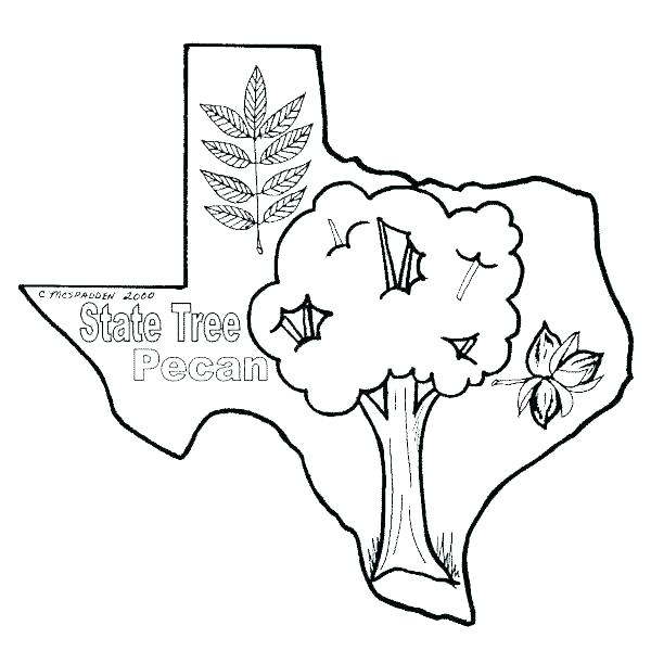 600x600 Colorado State Flag Coloring Page