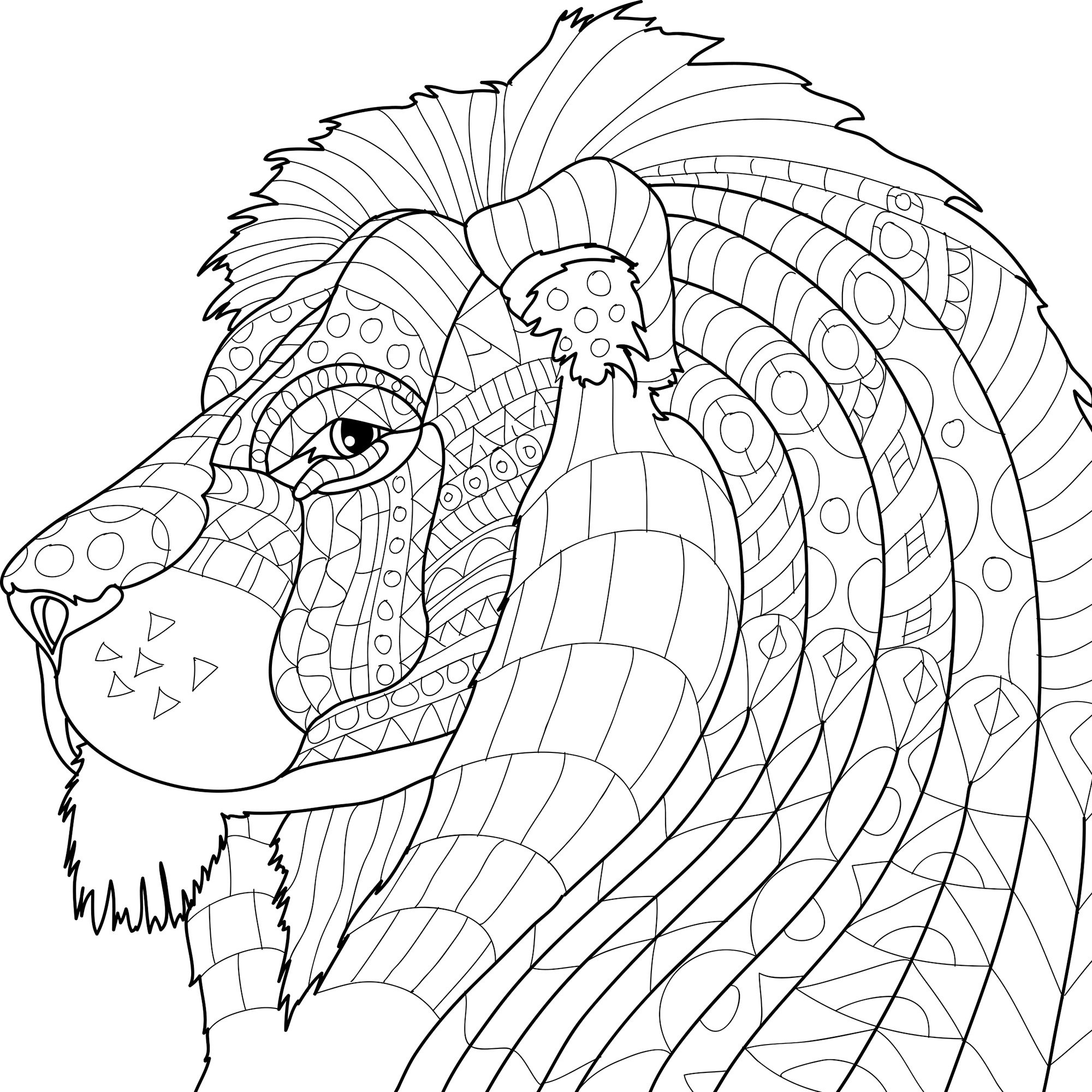 2000x2000 Animal Kingdom Adult Coloring Book Set With Colored
