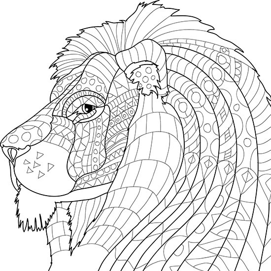 550x550 Animal Kingdom Adult Coloring Book With Color Pencils