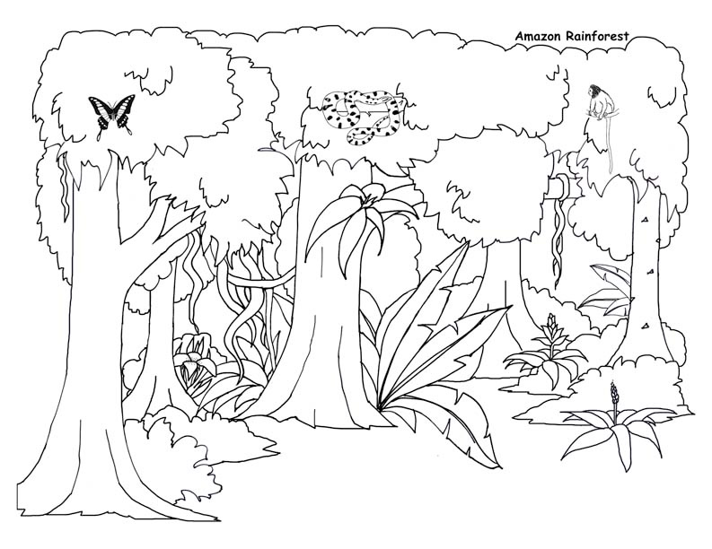 793x612 Rainforest Background Coloring Page