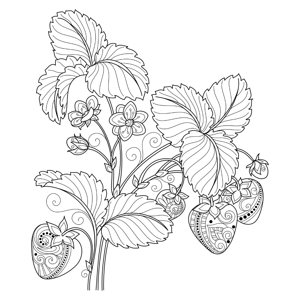 1000x1000 Adult Coloring Pages