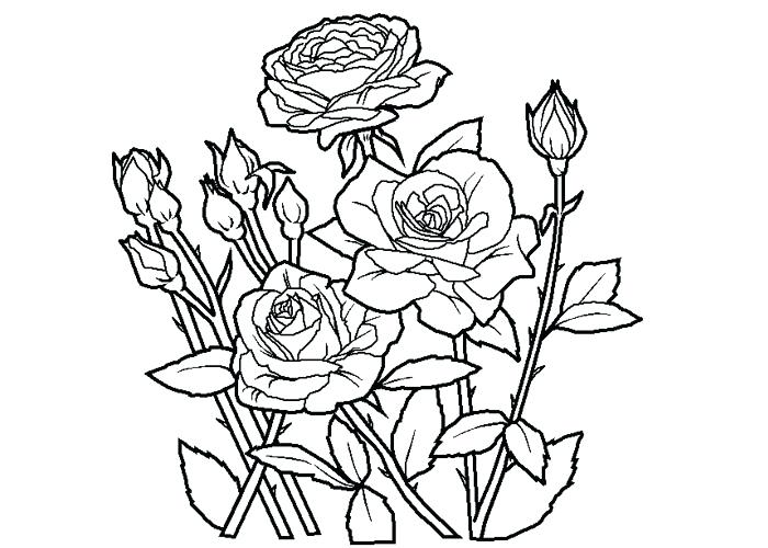 700x500 Roses Coloring Pages Inspiring Rose Coloring Page Inspiring