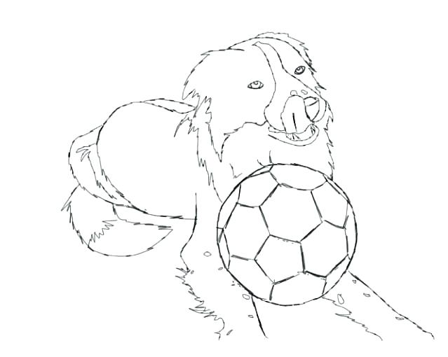 639x510 Border Collie Coloring Pages Border Collie Coloring Pages Border