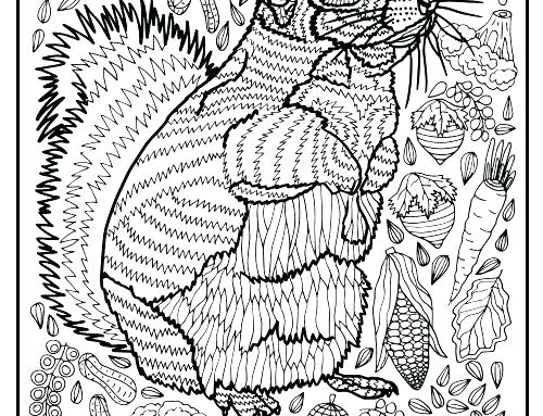 500x383 Border Collie Coloring Pages Border Collie Coloring Pages Squirrel