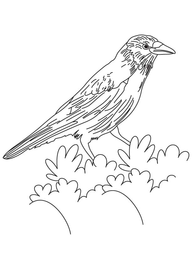 Coloring Page Crow