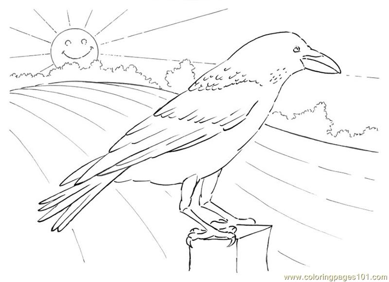 800x581 Crow Looking Coloring Page