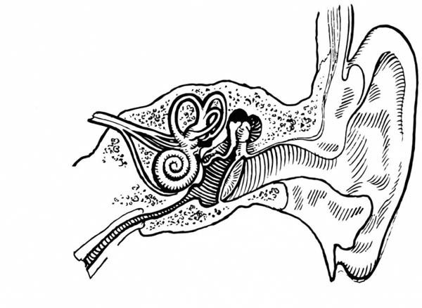 600x438 Ear Coloring Page Human Anatomy Ear Coloring Pages Bulk Color