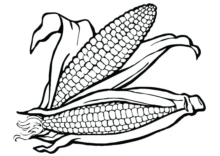 750x531 Corn Cob Coloring Page Ear Of Corn Coloring Page Coloring Pages