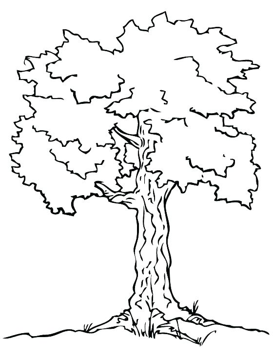 560x738 Free Oak Tree Coloring Pages Simple Drawing Leaves