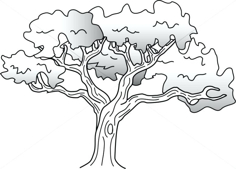 776x556 Oak Tree Coloring Page Simple Oak Tree Drawing Oak Tree Leaves