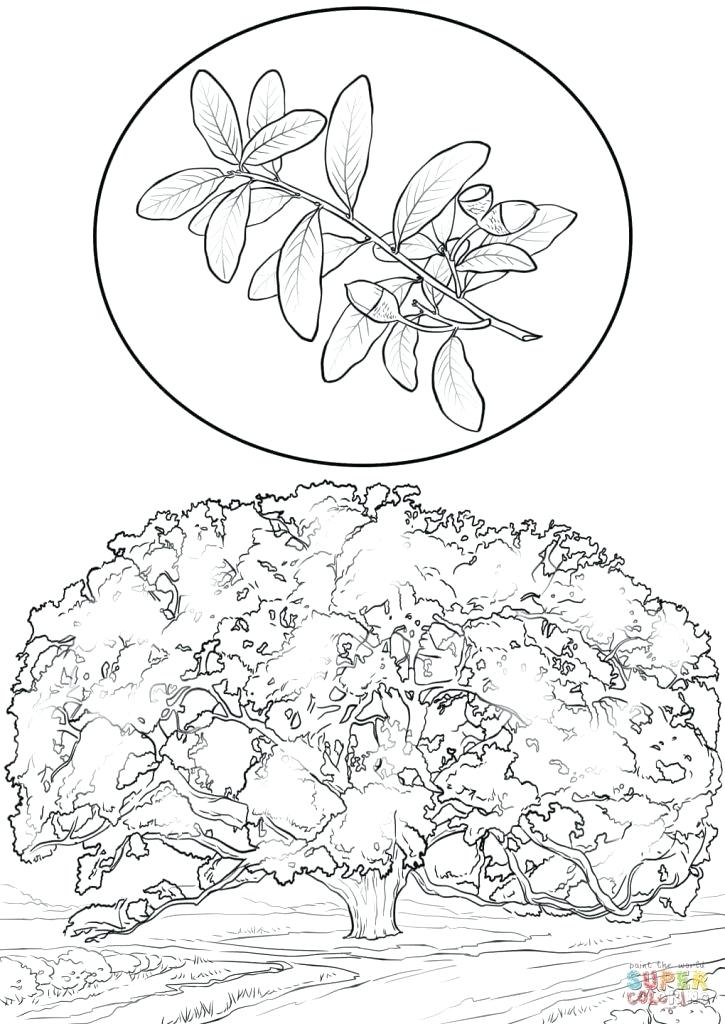 725x1024 Oak Tree Coloring Page Tree Coloring Pages Oak Tree Coloring Page