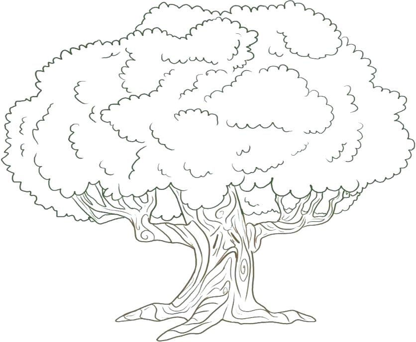836x688 Apple Tree Coloring Page Printable Tree Coloring Page Free