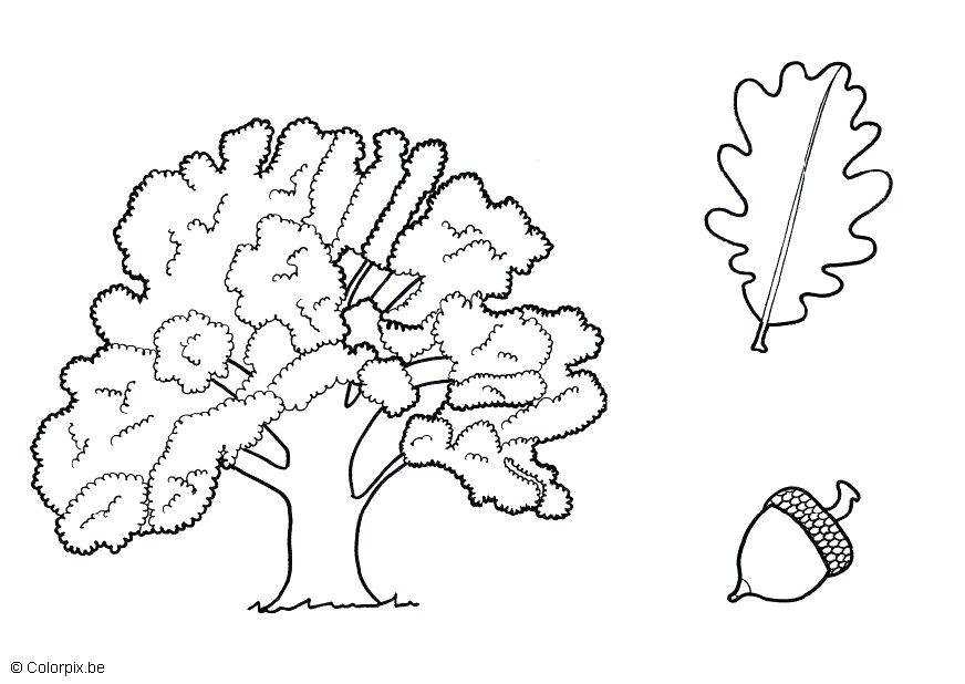 872x618 Oak Tree Coloring Pages Coloring Page Oak Red Oak Tree Coloring