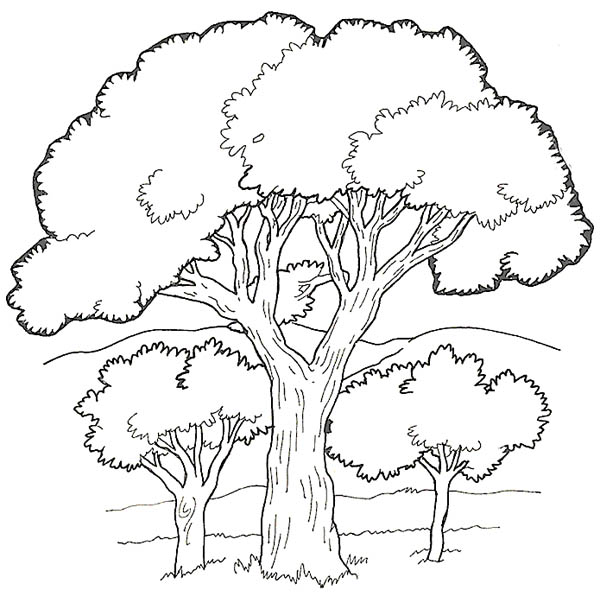 600x603 Oak Tree In The Forest Coloring Page Color Luna