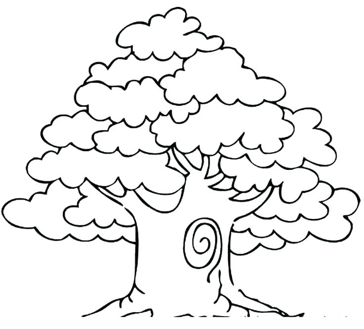 736x666 Awesome Drawing Oak Tree Coloring Page And Awesome Drawing Oak