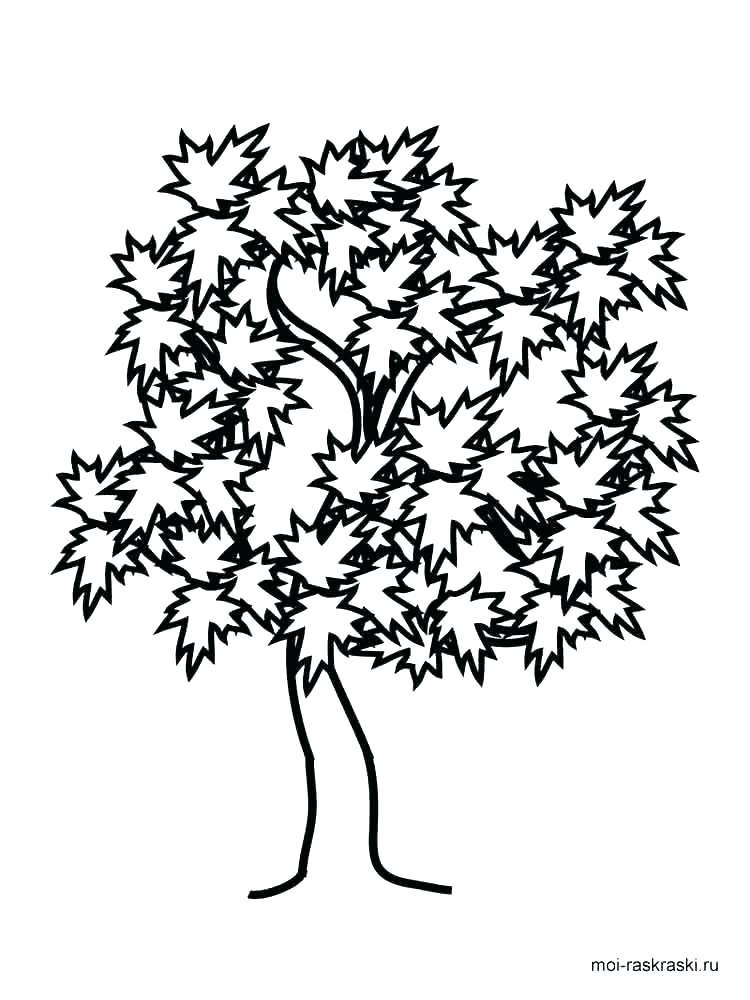 750x1000 Trees Coloring Pages Oak Tree Coloring Page For Kids Palm Tree